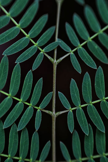 Backgrounds Beauty In Nature Close-up Detail Focus On Foreground Full Frame Green Green Color Growing Growth Leaf Leaf Vein Leaves Lush Foliage Macro Natural Pattern Nature Outdoors Pattern Plant Repetition Fujifilm X-e1 Beautifully Organized Tranquility Market Bestsellers 2017