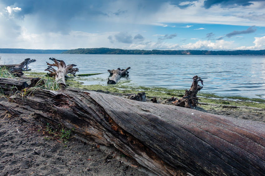 Driftwood lines the shore at Dash Point State Park in Washington State. Driftwood Art Beach Beauty In Nature Cloud - Sky Dash Point Day Dead Plant Driftwood Horizon Horizon Over Water Land Landscape Nature No People Non-urban Scene Scenics - Nature Sea Sky Tranquil Scene Tranquility Water Wood Wood - Material