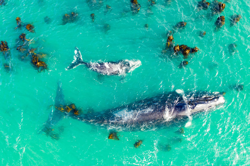 High angle view of whale in sea