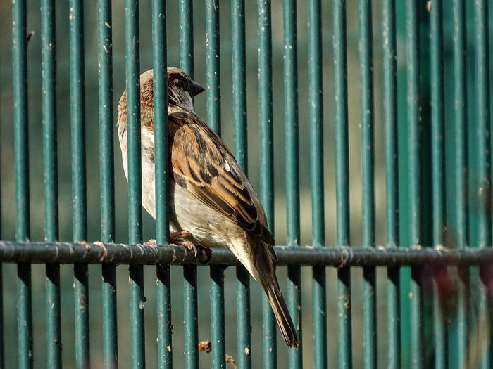 Freedom Animal Themes Between Bars Bird Close-up Metal One Animal Perching Prison Prison Breakout Sparrow