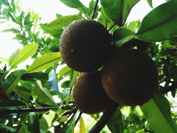 EyeEm Nature Lover Hugging A Tree Frutas Y Verduras