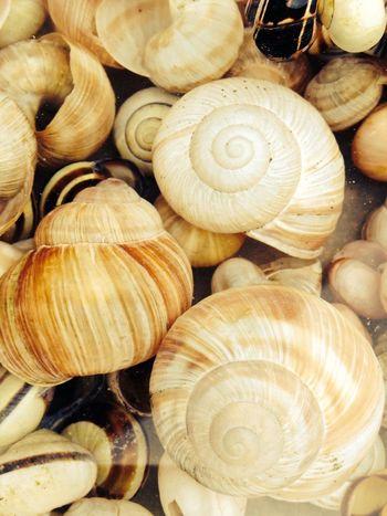 Snail Pattern Taking Photos Just Something