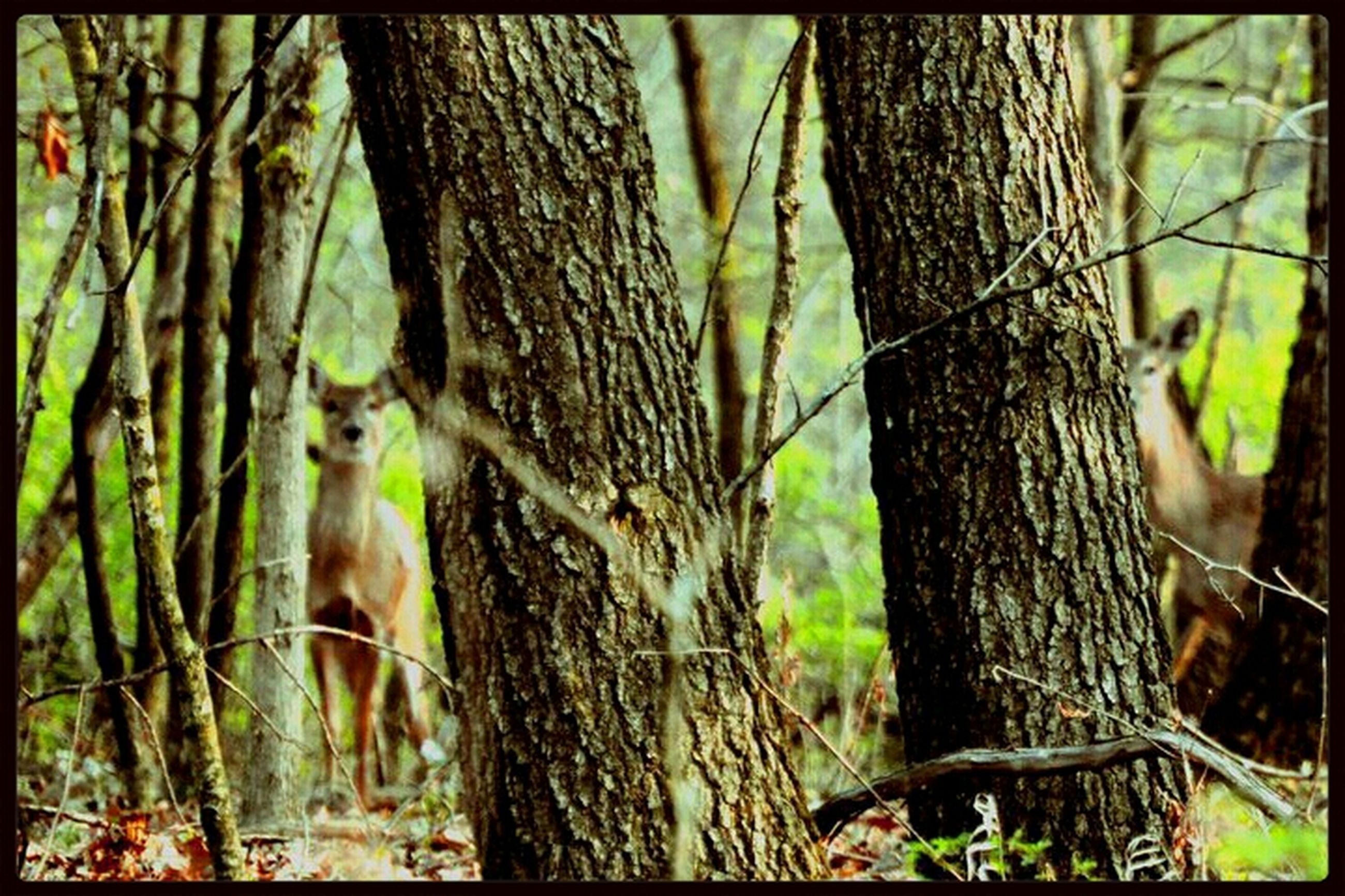animal themes, tree trunk, tree, wildlife, animals in the wild, forest, one animal, branch, mammal, nature, growth, transfer print, day, outdoors, squirrel, no people, woodland, auto post production filter, focus on foreground, zoology