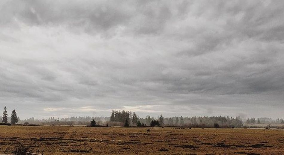 Idk Beautiful VSCO Vscocam Art Artofvisuals AOV PNW Pacificnorthwest Uperleftusa Nature Horizon IPhone Picoftheday Instagood Photographer Clouds