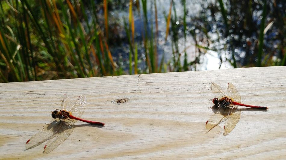 EyeEm Selects Insect Day Animals In The Wild Outdoors Nature Animal Themes No People Tree Water Close-up