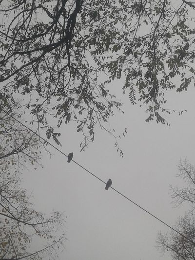 Low angle view of birds on silhouette tree