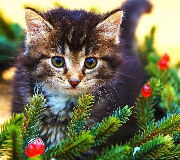 A little kitten make me feel in love..😍😍 Portrait Looking At Camera Domestic Cat Pets Close-up
