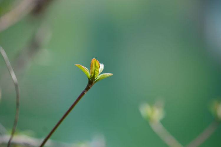 Plant Growth Beauty In Nature Close-up Fragility Vulnerability  Plant Part Leaf Green Color Focus On Foreground Flower Nature No People Flowering Plant Day Freshness Beginnings Outdoors Selective Focus Plant Stem Small