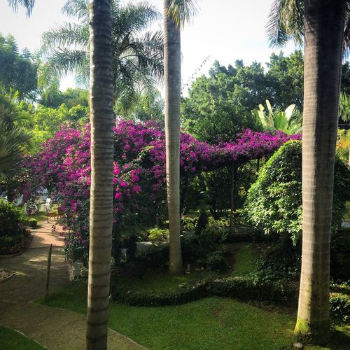 Vacation Restaurant Swimming Pool Pool Hotel Room Hotel View Hotel Holiday Inn Vacation Time Cuernavaca