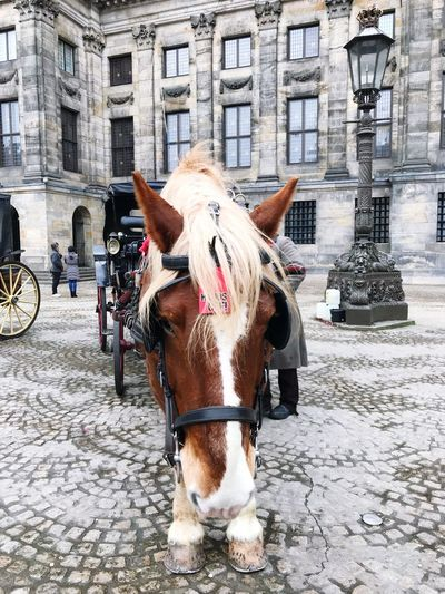 Horse Cobblestone One Animal Street Building Exterior Animal Themes Domestic Animals Architecture Built Structure Mammal Horse Cart Transportation Outdoors Day No People City