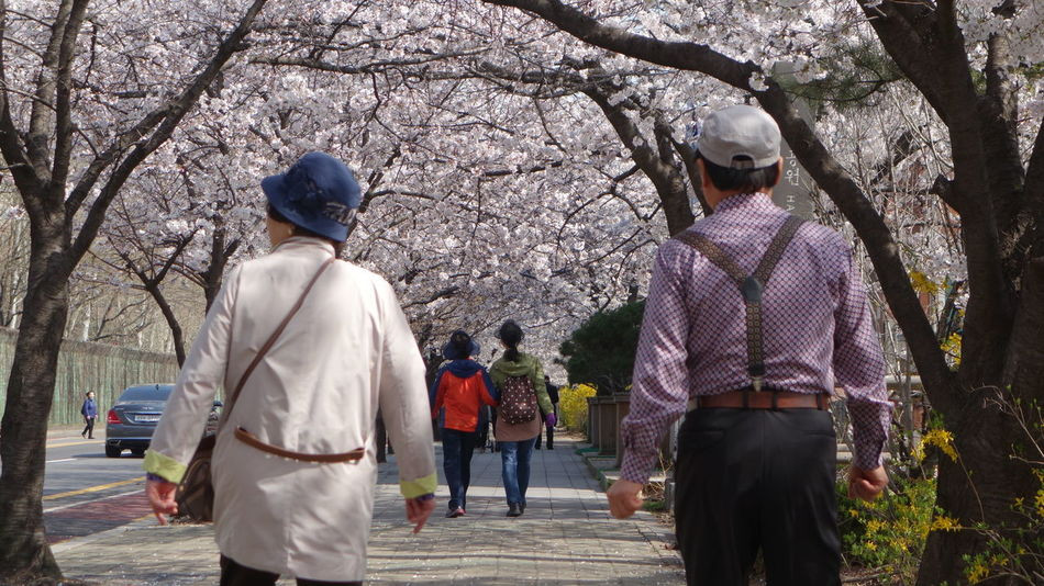 Bonding Casual Clothing Cheery Cherry Blossoms Day EyeEm Best Shots EyeEm Nature Lover Leisure Activity Lifestyles Love Person Rear View Sakura Spring Springtime Street The Way Forward Togetherness Tree Walking