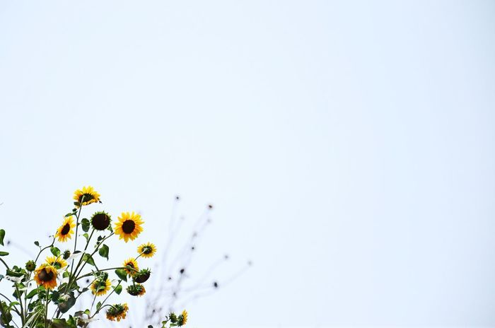 Minimal Landscape Flower Taking Photos Hello World EyeEm Best Edits EyeEm Best Shots EyeEm Gallery Taking Photos Photo Colour Of Life Getting Inspired Our Best Pics Colors Exceptional Photographs Mypointofview Popular Photos Minimalism Open Edit