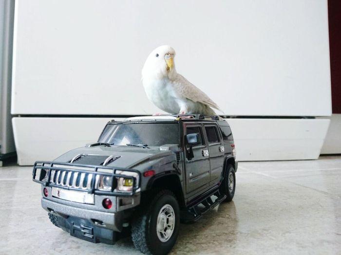 crazy drift 😂 Remote Control Relaxing Crazy Moments Crazybird Birds Of EyeEm  Freedom! Have Fun çılgınlık Eglence Zamanı özgürlük Insan Eli Değmediği Yerdedir özgürlük No People Bird Day Outdoors