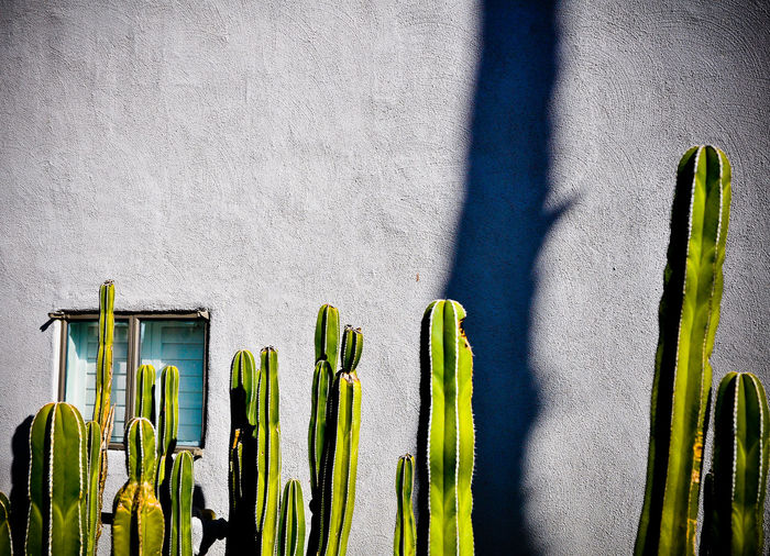 Architecture Cactus Green Green Color In A Row Medium Group Of Objects No People Thorn Wall Wall - Building Feature Adapted To The City Urban Landscape Urban Geometry Grey Wall EyeEm Selects California Dreamin