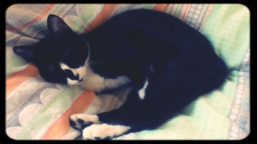Cat おはぎさん