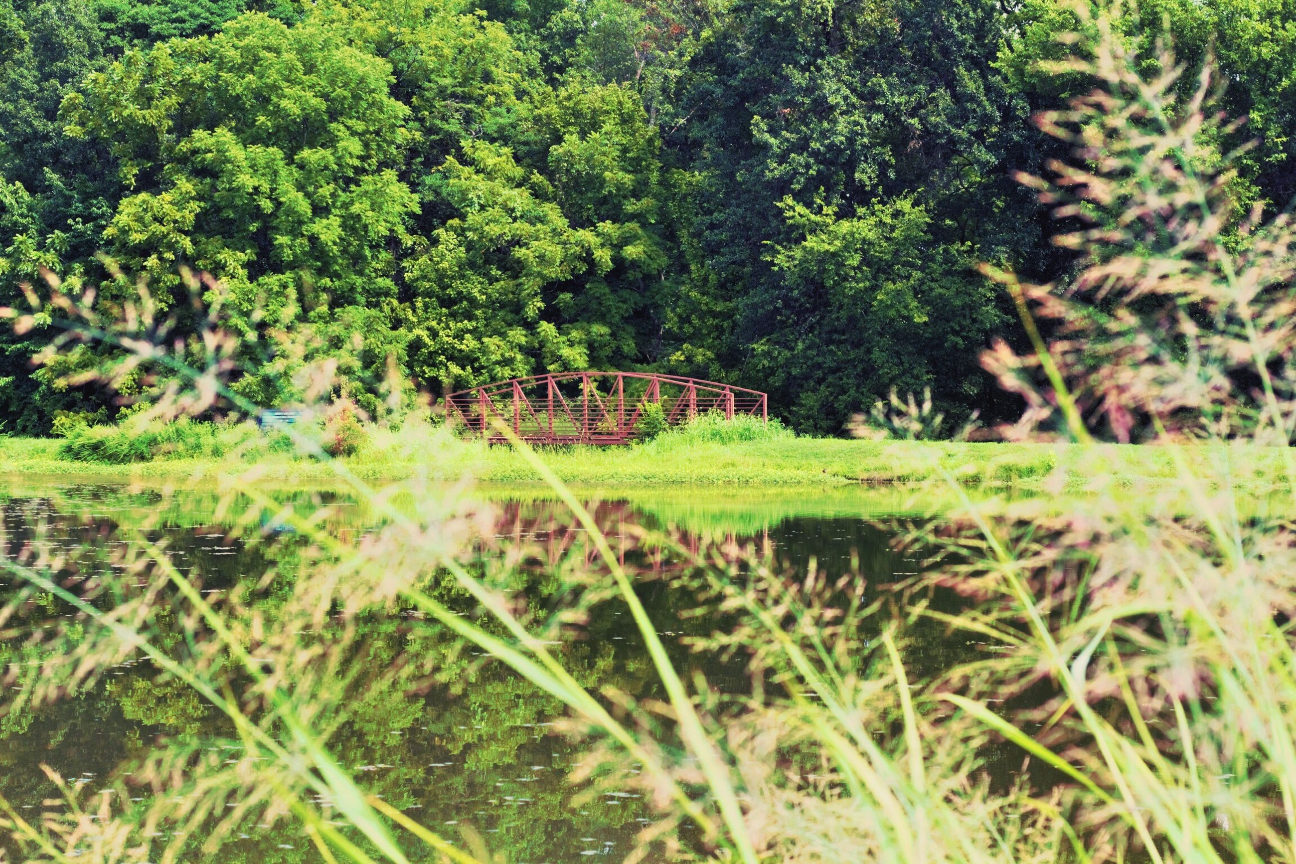 growth, tree, green color, nature, plant, beauty in nature, tranquil scene, scenics, tranquility, day, outdoors, green, non-urban scene, remote, growing, solitude, lush foliage, freshness, surface level, no people, garden