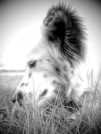 Fynn , Dog , 2 Years