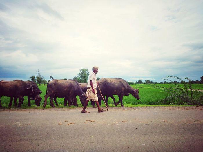 Maninagar Ahmedabad India My City Home EyeEm Selects Full Length Elephant Tree Sky Cloud - Sky Water Buffalo