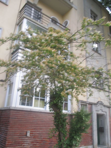 #branches Alvalade, Lisbon Architecture Brick Walls Bricks Building Building Exterior Built Structure City Dark Green Leaves Day Exterior House Light Green Nature No People Outdoors Place Residential  Romantic Tree Terrace Tree Tree And The Building Urban Details Window