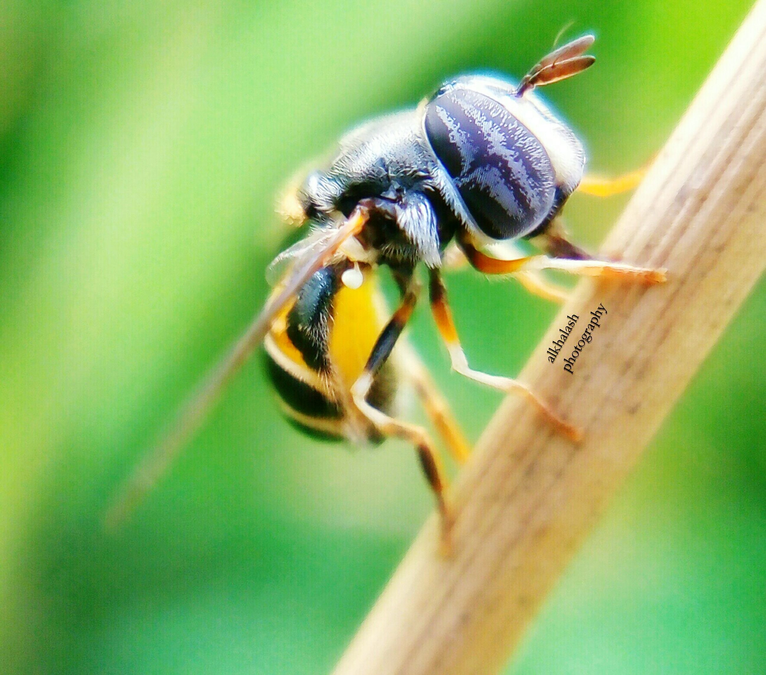 insect, one animal, animal themes, animals in the wild, wildlife, close-up, focus on foreground, selective focus, nature, flower, zoology, day, animal antenna, bee, outdoors, fly, beauty in nature, no people, animal wing, full length