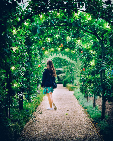 Rear view of woman walking on footpath amidst trees