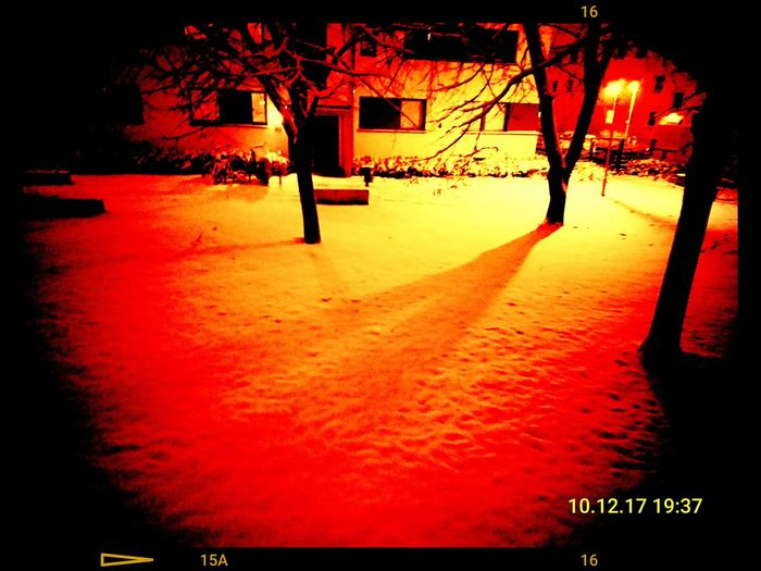 First snow Snow First Snow 2017 Christmas Time Snowfall Red Outdoors No People Tree Night Nature Sky