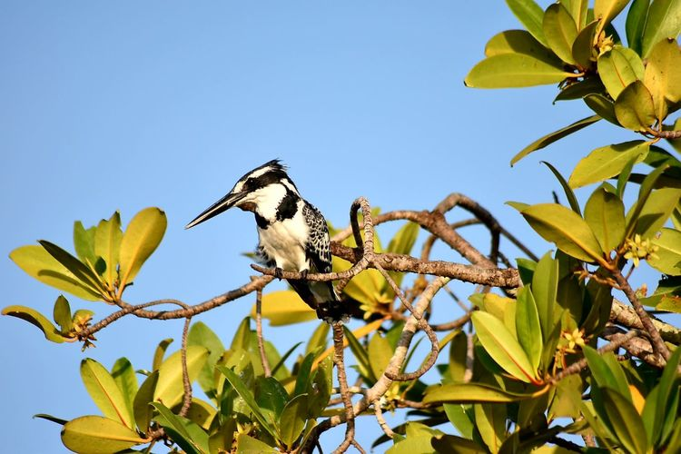 Low Angle View Of Bird Perching On Tree Against Clear Sky
