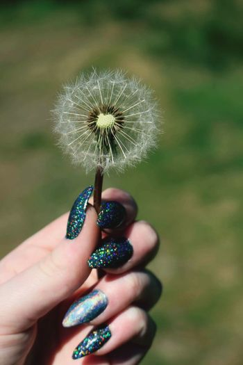 Cropped Hand Of Woman With Nail Art Holding Dandelion