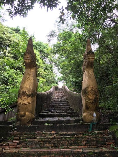 Tree Sculpture Day Statue No People Low Angle View Growth Nature Outdoors Ancient Civilization Architecture Sky