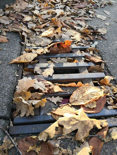 Clogged manhole cover with autumn leaves on a street Manhole Cover Gulli GULLY Autumn Leaves Clogged Drain Autumn Foliage Leaf Avenue Leaves Danger Of Slipping Season  Slippery Wet Danger Muddy Dangerous Rainwater Shaft Constipation Country Road Security Road