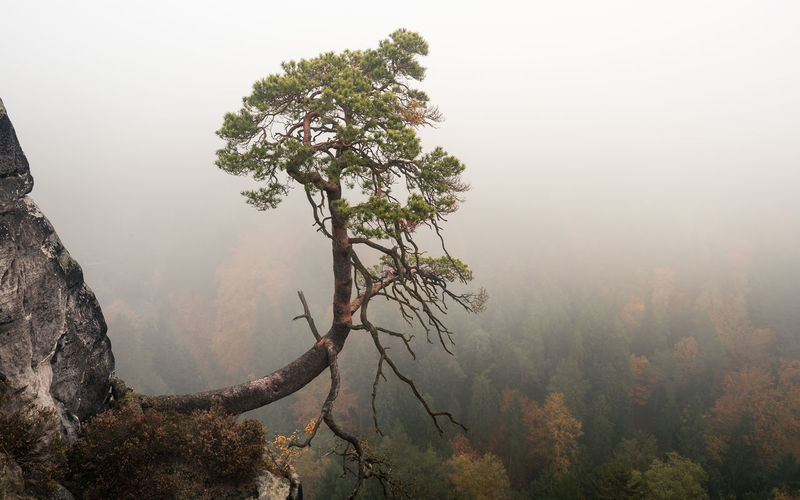EyeEmNewHere Beauty In Nature Branch Day Fog Foggy Forest Growth Hazy  Landscape Mist Mountain Mountain Range Nature No People Outdoors Scenics Sky Tranquil Scene Tranquility Tree
