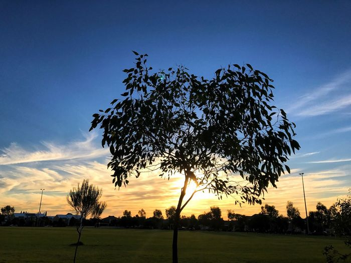 Sunset Blue Sky And Clouds Tree Silhouette Evening Landscape Nature Sky Outdoors Beauty In Nature EyeEm Gallery Eye4photography  Skylovers Composition Taking Photos Enjoying Life Park