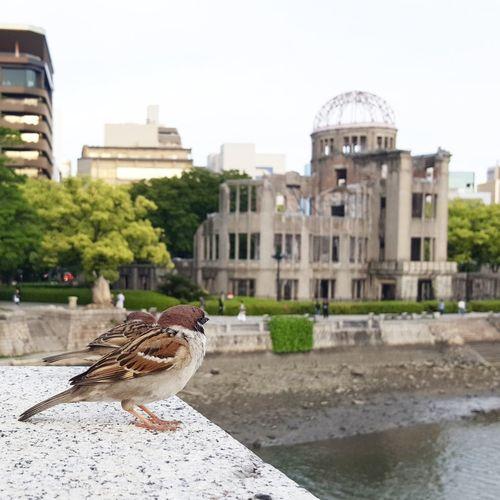 Hiroshima Peace