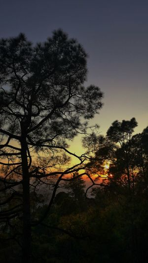 Idyllic Sunrise Sunrise Scenery Morning Calm EyeEm Best Shots Leica Photography. Beauty In Nature Great Morning Off Road Driving Tree Silhouette Sky Countryside Atmospheric Mood Tranquil Scene Idyllic Tranquility Dramatic Sky Calm