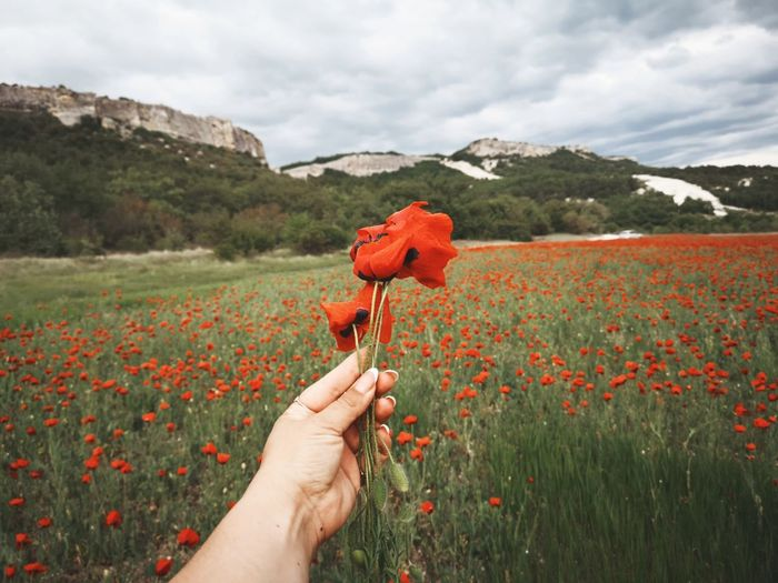 Cropped hand holding red poppy flowers against mountain range