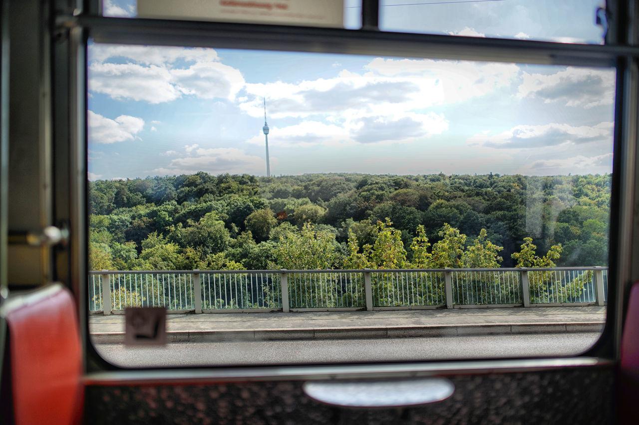 SCENIC VIEW OF TREES SEEN THROUGH WINDOW