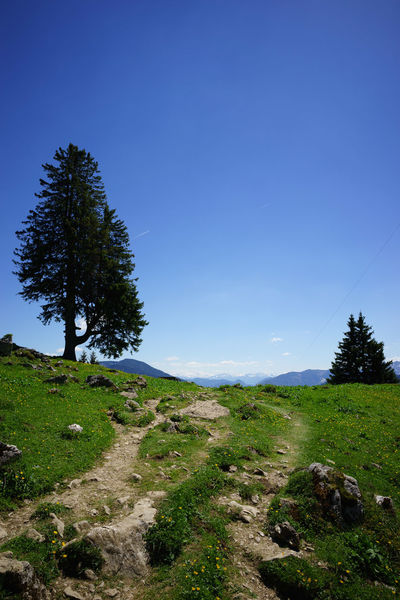 Auf dem Weg ins Tal, Wendelstein (On the way down, Wendelstein, Bavaria, Germany) Wendelstein Forest Landscape Mountain Nature No People Outdoors Scenics Tree