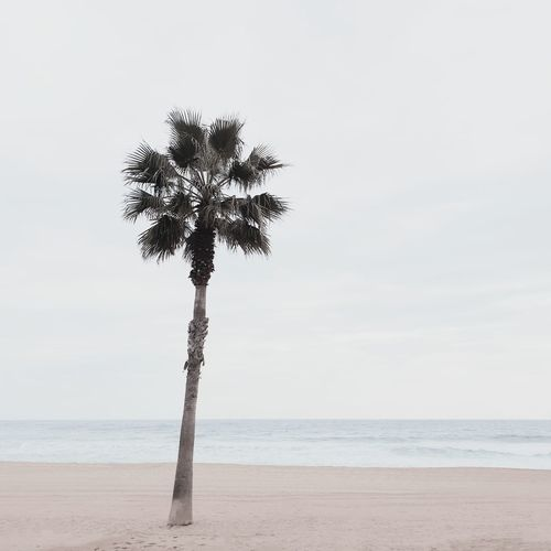 🌴﹏︱pastelandscape EyeEm Best Shots First Eyeem Photo EyeEmNewHere EyeEm Nature Lover Nature Nature_collection Minimal Minimalism Samsungphotography VSCO Barcelona Nature Photography Beach Sea Sea And Sky Palm Tree