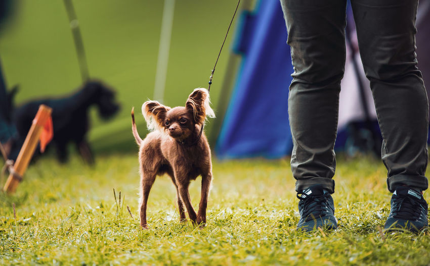 Low section of dog standing on grass