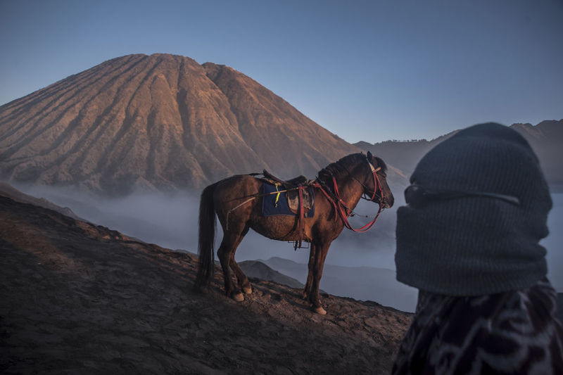 PROBOLINGGO, EAST JAVA, INDONESIA - August 11, 2014 The Yadnya Kasada, or Kasada, a ritual ceremony of the tribe held on Mount Bromo in East Java. Domestic Animals Mammal Pets Domestic One Animal Vertebrate Sky Nature Working Animal Animal Wildlife Day Horse Livestock Land Clear Sky People Real People Side View Outdoors Herbivorous Bromo-tengger-semeru National Park Bromo Mountain INDONESIA Bromo Volcano Kasada Capture Tomorrow My Best Photo