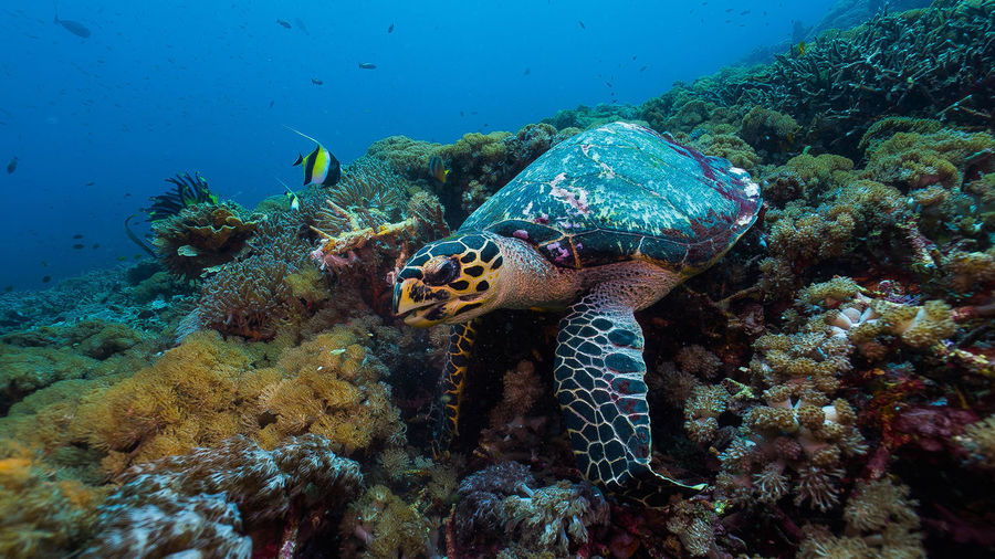 Close-Up Of Turtle By Coral In Sea