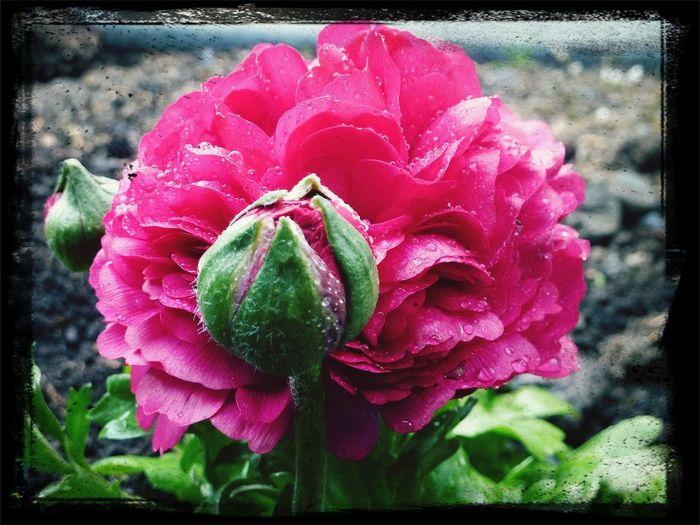 Simple beauty Flower Macro Pink Flowers