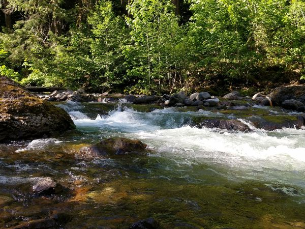 EyeEm No Edit No Filter Green Color Beauty In Nature Mountain Creek Clear Water Cold Water Camping Spot Summertime EyeEm Nature Lover Tranquility Favorite Place Where My Heart Belongs Outdoors Water Happiness Mt. Rainier Motion Day Breathing Space