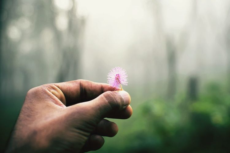 Close-up of man hand holding flower in forest