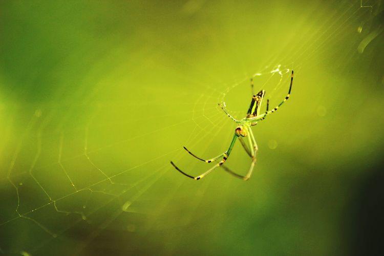 Spider web on web