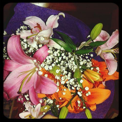 Zambaklara aşıksam demek ki :) Hayatinrenkleri Miskokulucicekler Nature Flowers