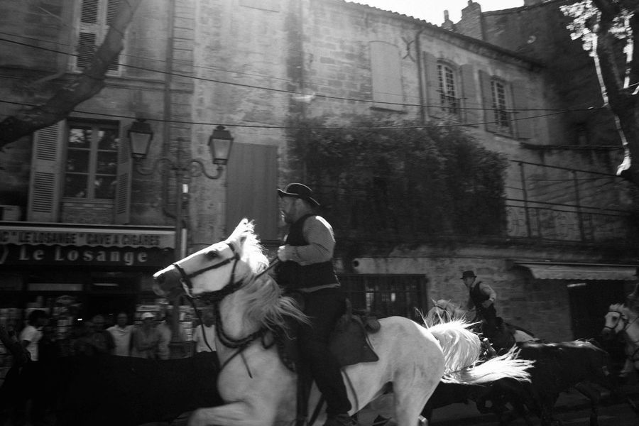 The formation fell apart and bulls escaped. SUD_ Abrivado Manade Whitehorse Documentary Provence Uzés Traditional Culture Blackandwhite Taureaux Camargue Southoffrance