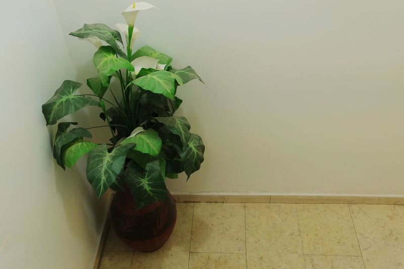 Fakeplant Wall - Building Feature Plant Part Plant Leaf Green Color Indoors  Growth No People Potted Plant Close-up Wall Decoration
