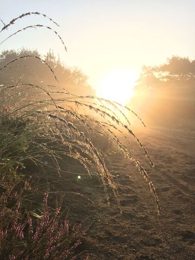 Beauty In Nature Bright Day Fragility Grass Grass Family Growth Lens Flare Majestic Nature No People Non-urban Scene Outdoors Plant Scenics Seascape Sky Sun Sunbeam Sunlight Sunrise Silhouette Tranquil Scene Tranquility Uncultivated