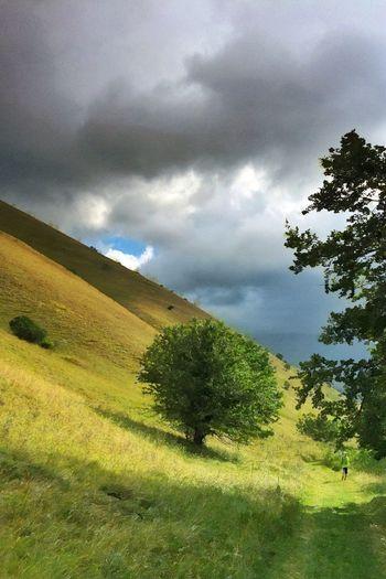 On its own NEM Landscapes NEM Painterly NEM GoodKarma NEM Clouds